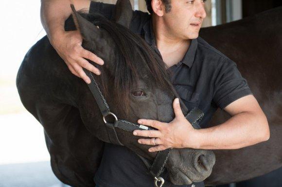 Suivi adapté en accord avec le vétérinaire de votre cheval Passy