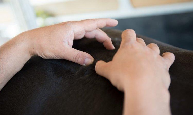 Ostéopathie équine Passy